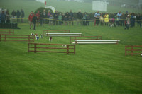 Jack Russell Terrier Races